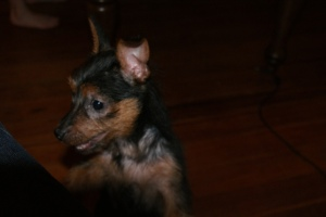Hello!  I am the new pup